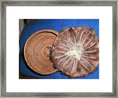 Pheasant Feather Lid Pine Needle Basket Framed Print by Russell  Barton