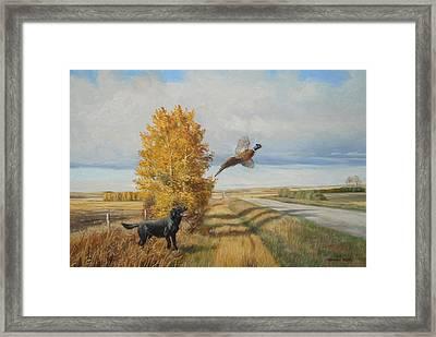Pheasant Flush Framed Print by Norman Kelly