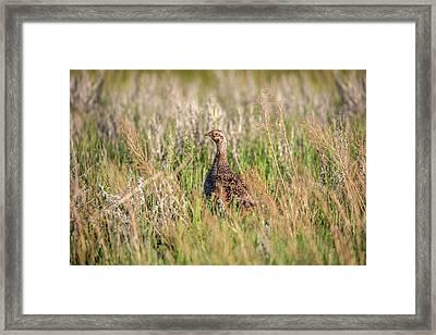 Pheasant Hen Framed Print