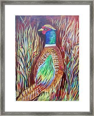 Pheasant In Sage Framed Print by Belinda Lawson