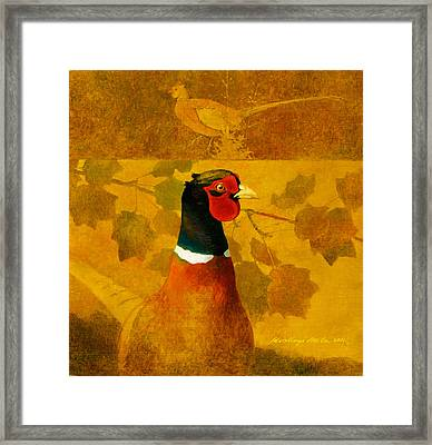 Pheasant In Yellow Framed Print