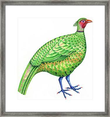 Pheasant Framed Print by Jane Tattersfield