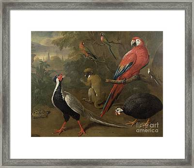 Pheasant Macaw Monkey Parrots And Tortoise  Framed Print by Charles Collins