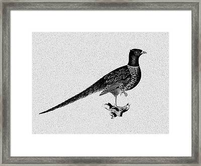 Pheasant Framed Print by Mark Rogan