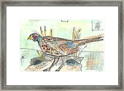 Pheasant Framed Print by Matt Gaudian