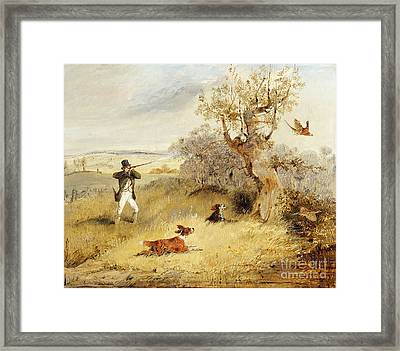Pheasant Shooting Framed Print