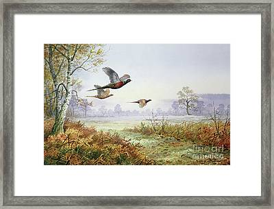 Pheasants In Flight  Framed Print by Carl Donner