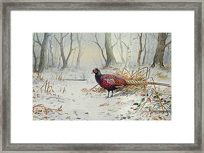 Pheasants In Snow Framed Print by Carl Donner
