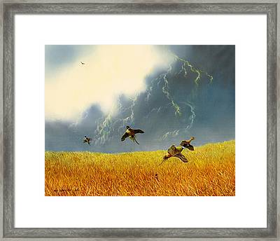 Pheasants On The Rise Framed Print by Don Griffiths