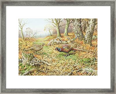Pheasants With Blue Tits Framed Print