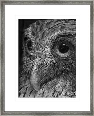 Philippine Eagle Owl Framed Print