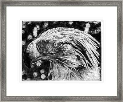 Philippine Eagle Portrait Framed Print