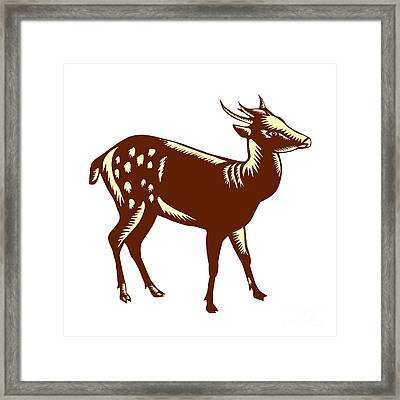 Philippine Spotted Deer Woodcut Framed Print