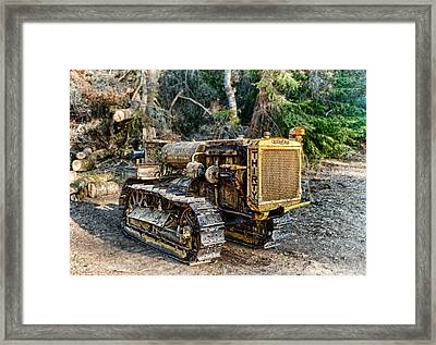 Philo Cat Framed Print by Betty Depee