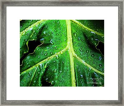 Philodendron Rain Framed Print