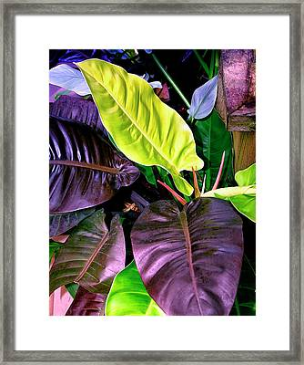 Philodendron Framed Print