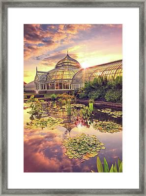 Lilys At Phipps  Framed Print