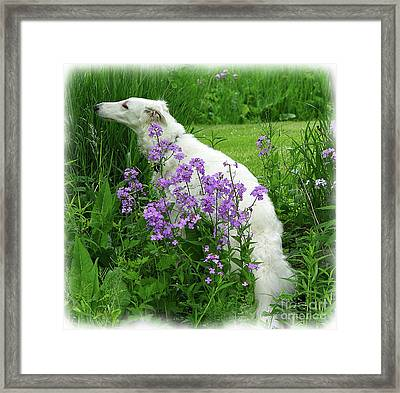 Phlox And Hound Framed Print by Deborah Johnson