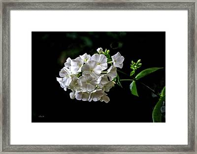 Phlox Flowers Framed Print