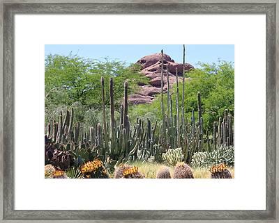Phoenix Botanical Garden Framed Print
