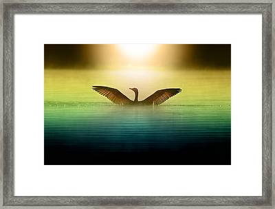 Phoenix Rising Framed Print by Rob Blair