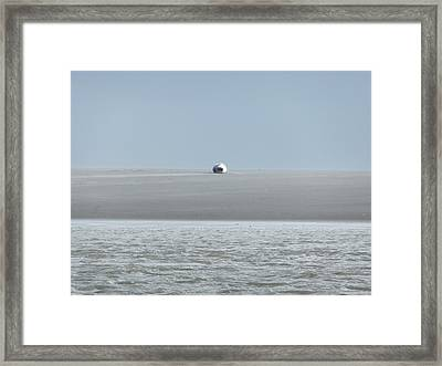 Phoque Blanc Roulant Au Banc Framed Print by Marc Philippe Joly