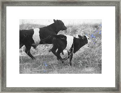 Photo Finish Framed Print by Donna Kennedy