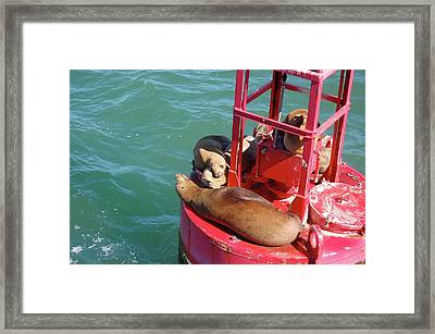 Photo Framed Print by Samantha Kimble