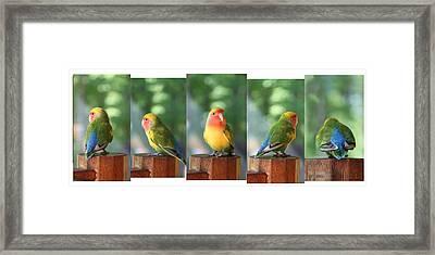Mug Shot - Photo Shoot 2 Framed Print