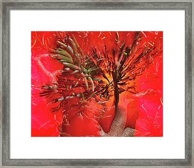 Framed Print featuring the photograph Photo Sin Thesis by Susan Capuano