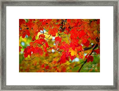 Photo Synthesis Framed Print by Diane E Berry