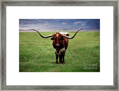 Photo Texas Longhorn A010816 Framed Print