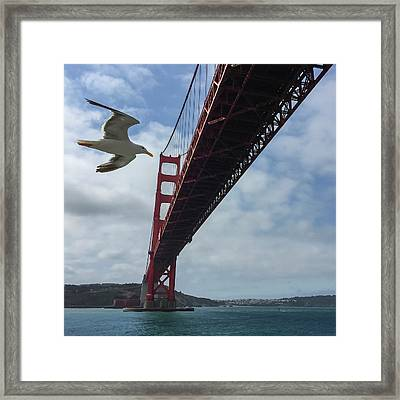 Framed Print featuring the photograph Photobomb by Chris Feichtner