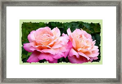 Framed Print featuring the photograph Photogenic Peace Roses by Will Borden