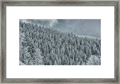 Framed Print featuring the photograph Winter Pines by Lou Novick