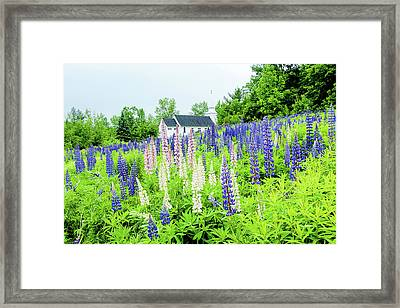 Framed Print featuring the photograph Photographers Dream Or Allergy Nightmare by Greg Fortier