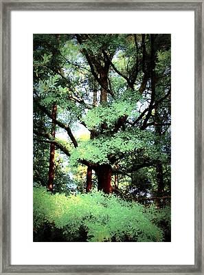 Photosynthesis Framed Print by Jill Tennison