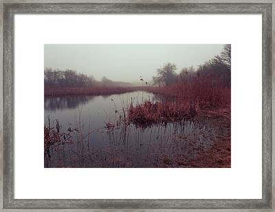 Phragmites And Fog Framed Print by Andrew Pacheco