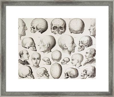 Phrenological Illustration Framed Print
