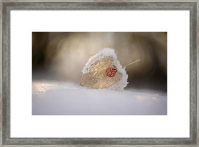 Physalis In Snow Framed Print