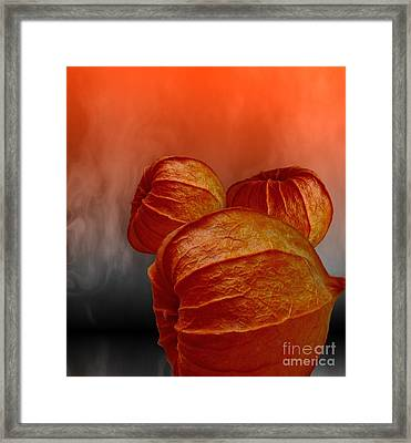 Physalis Framed Print