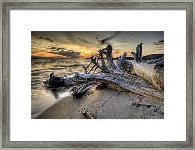 Pic Driftwood Framed Print