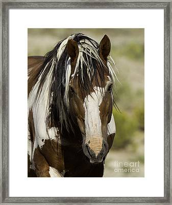 Picasso Comes Close Framed Print by Carol Walker