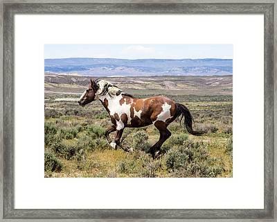 Picasso - Free As The Wind Framed Print