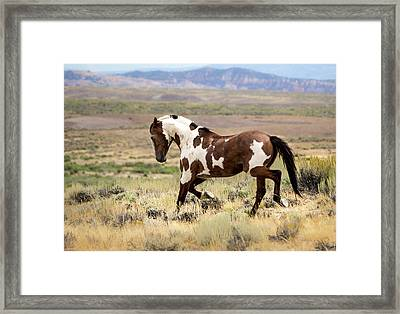 Picasso Strutting His Stuff Framed Print