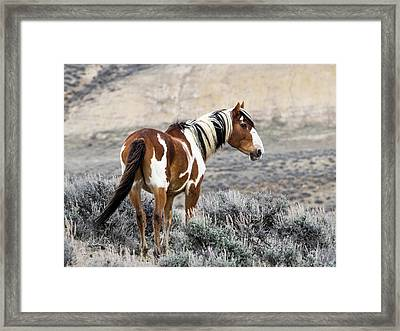 Picasso - Wild Mustang Stallion Of Sand Wash Basin Framed Print