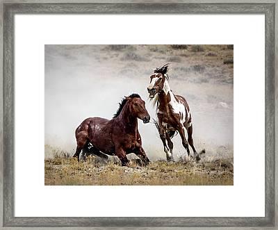 Picasso - Wild Stallion Battle Framed Print