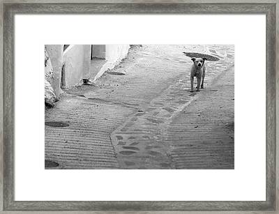 Picena 20 Framed Print by Jez C Self