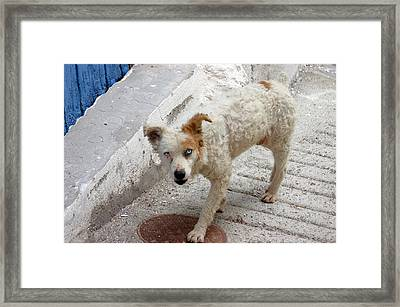 Picena 21 Framed Print by Jez C Self