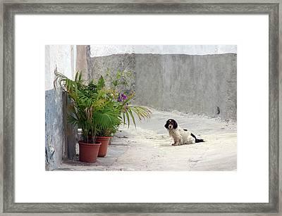 Picena 25 Framed Print by Jez C Self